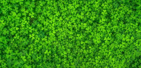 clover-clovers-green-158780.jpg